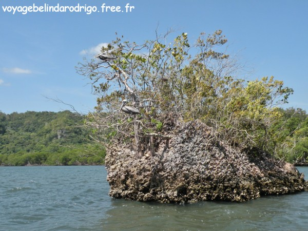 Mogote - Bahia San Lorenzo - Parque Nacional Los Haitises