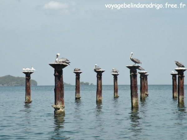 Oiseaux - Parque Nacional Los Haitises