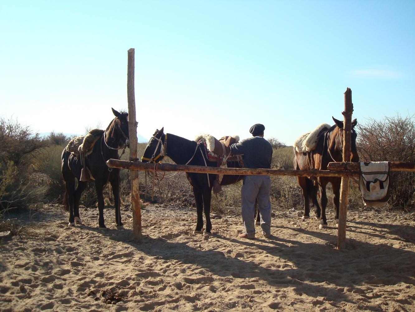 Balade à cheval - Mendoza