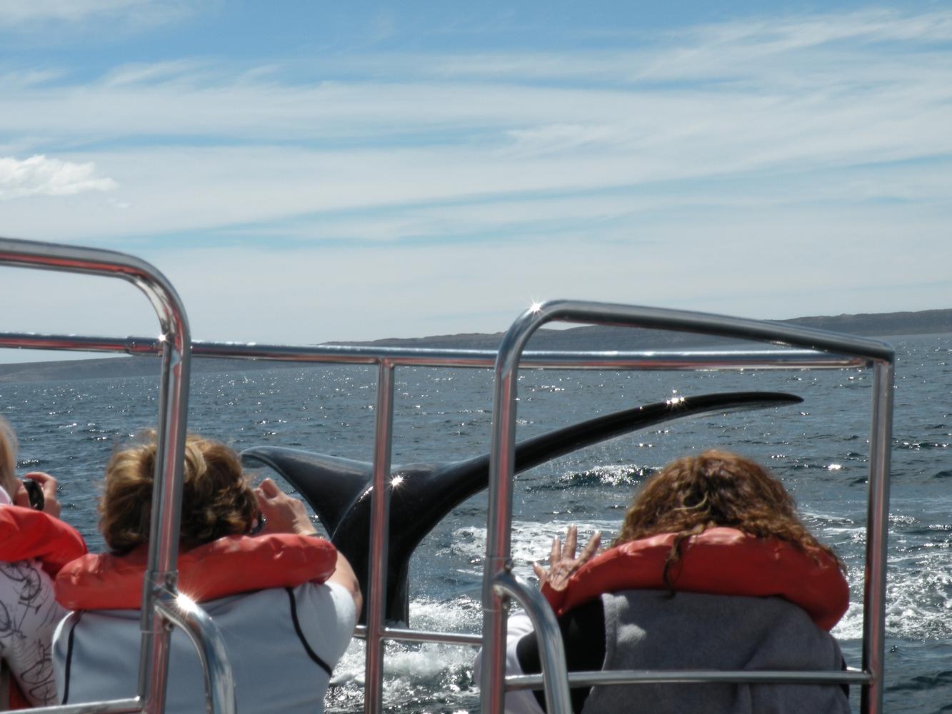 Baleine - Puerto Piramides