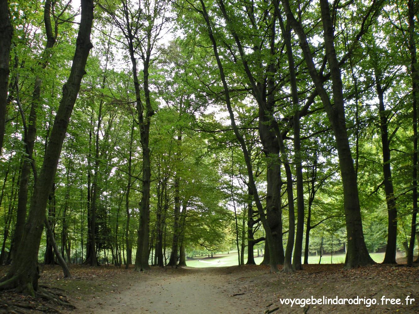 Bois de la Cambre - Bruxelles