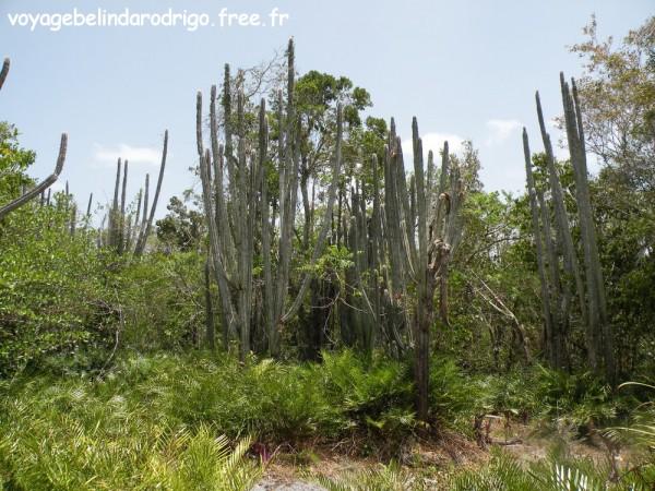 Bosque de Cactus - Sendero Padre Nuestro - Parque Nacional del Este