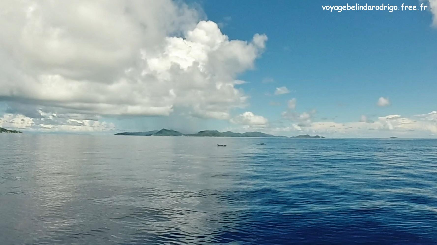 Dauphins -  Îles Félicité et Cocos