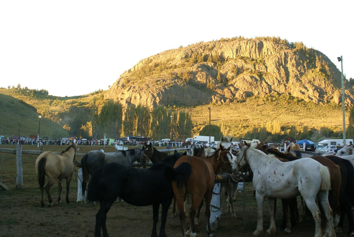 Fiesta de la Tradicion (10)