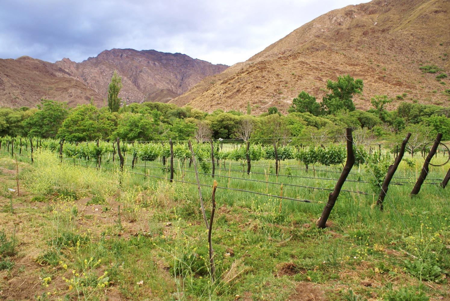 Vignoble - Finca La Paya - Cachi