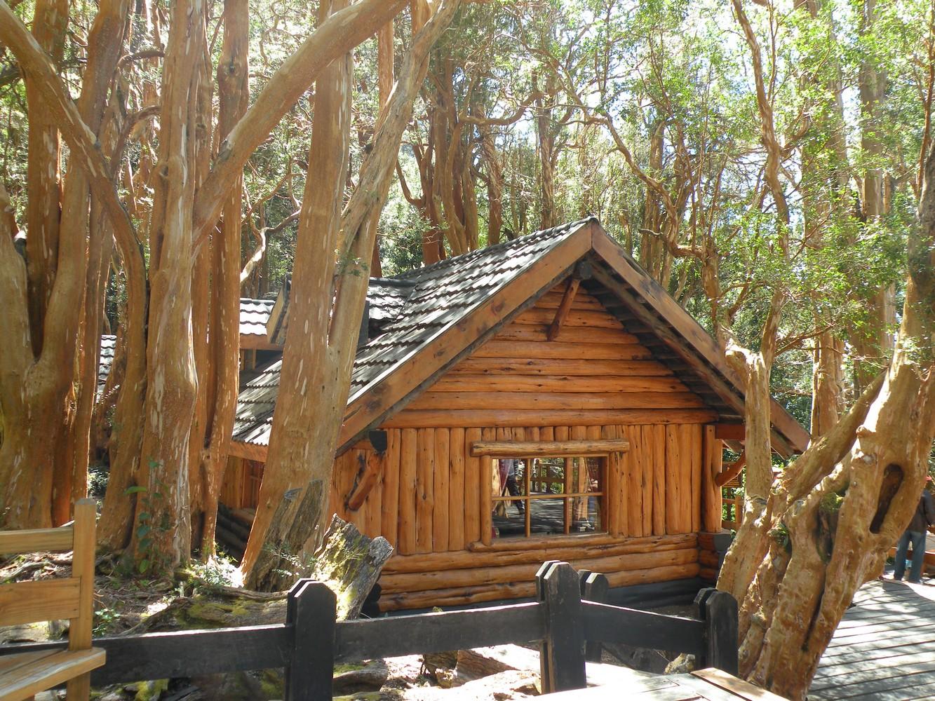 Forêt de Arrayanes