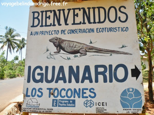 Iguanario - Los Tocones