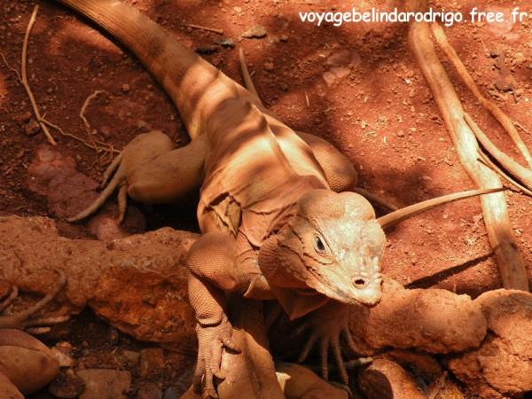 Iguanario - Los Tocones - Playa Rincon - Las Galeras (3)