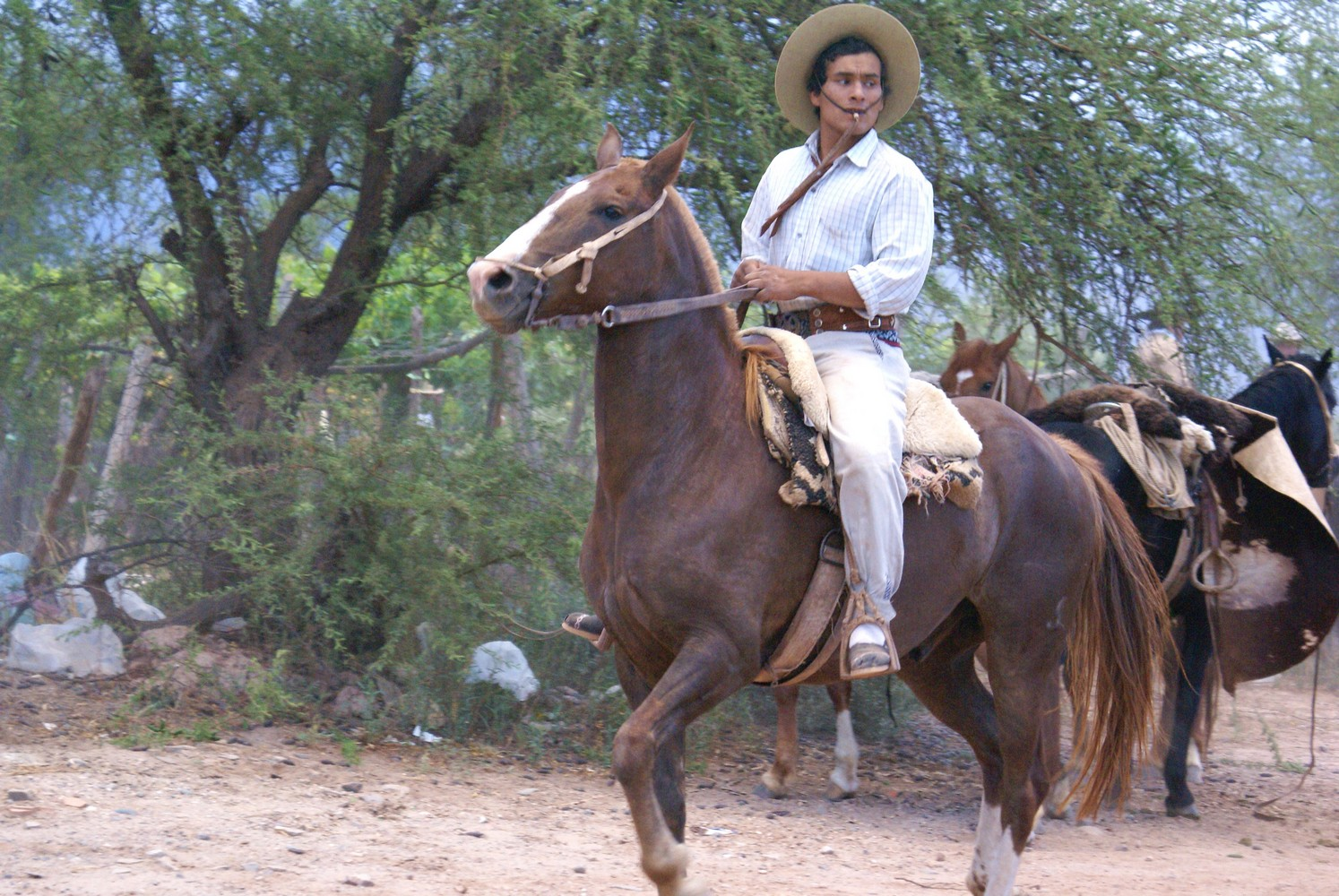 La Vaca Tranquila - San Carlos (2)