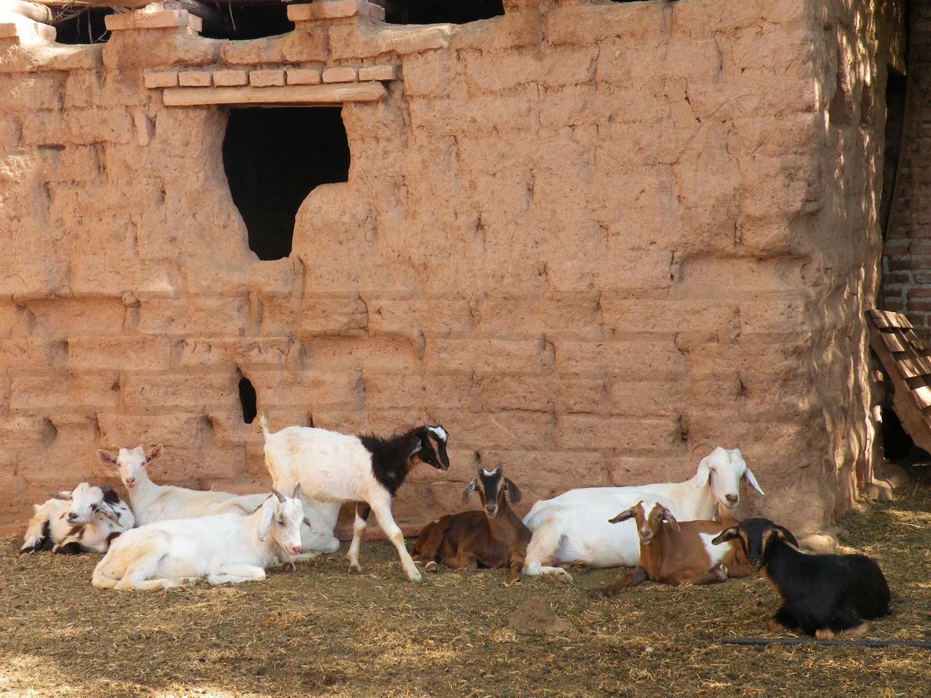 La Vaca Tranquila - San Carlos (7)