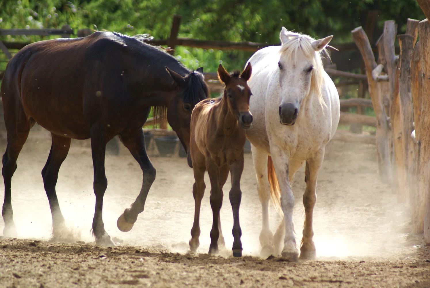 La Vaca Tranquila - San Carlos (9)