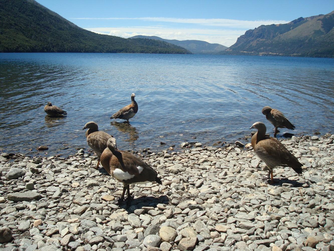 Cauquenes - Lago Gutierrez - Bariloche
