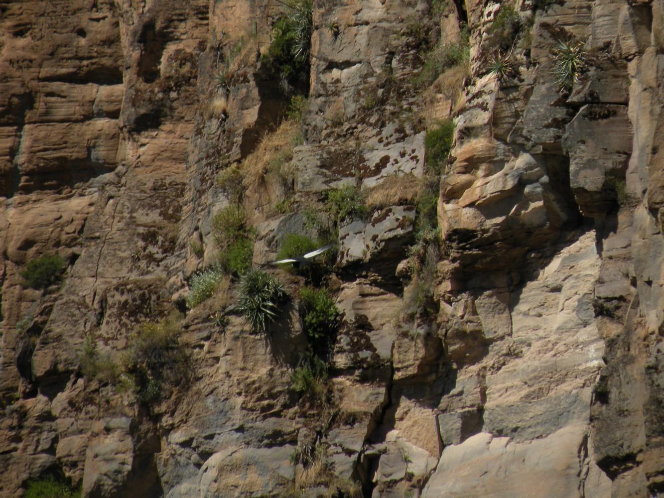 Mirador San Miguel - Cañon del Colca