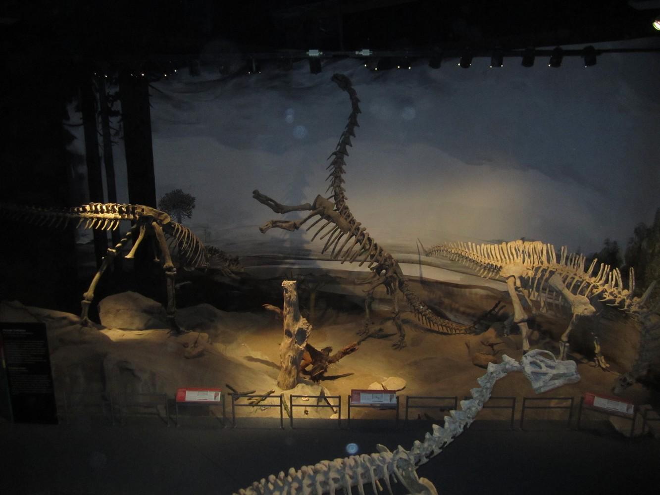 Museo Paleontológico