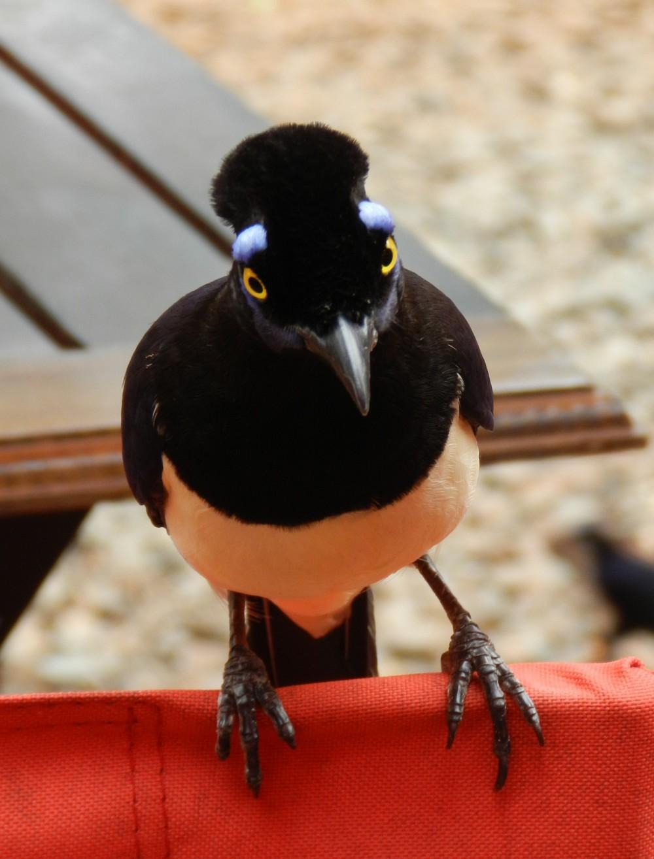 Oiseau – Parque Nacional Iguazú
