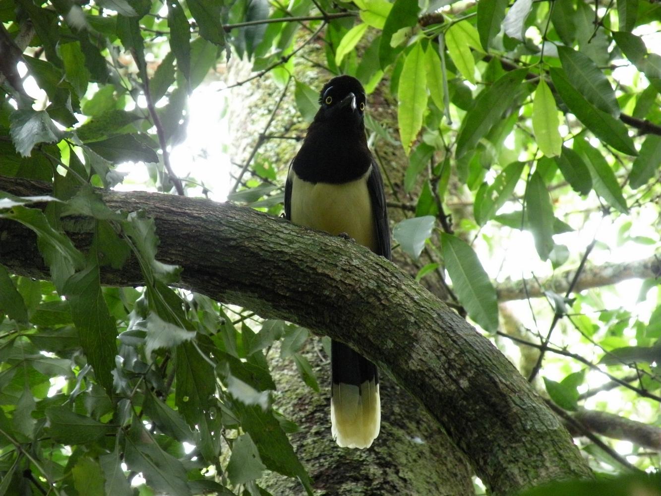 Oiseau - Iguazu