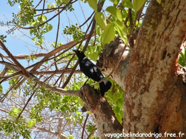 Oiseau - Isla Catalina
