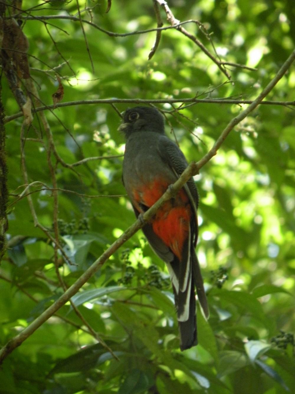 Oiseau - Parque Nacional Iguazú