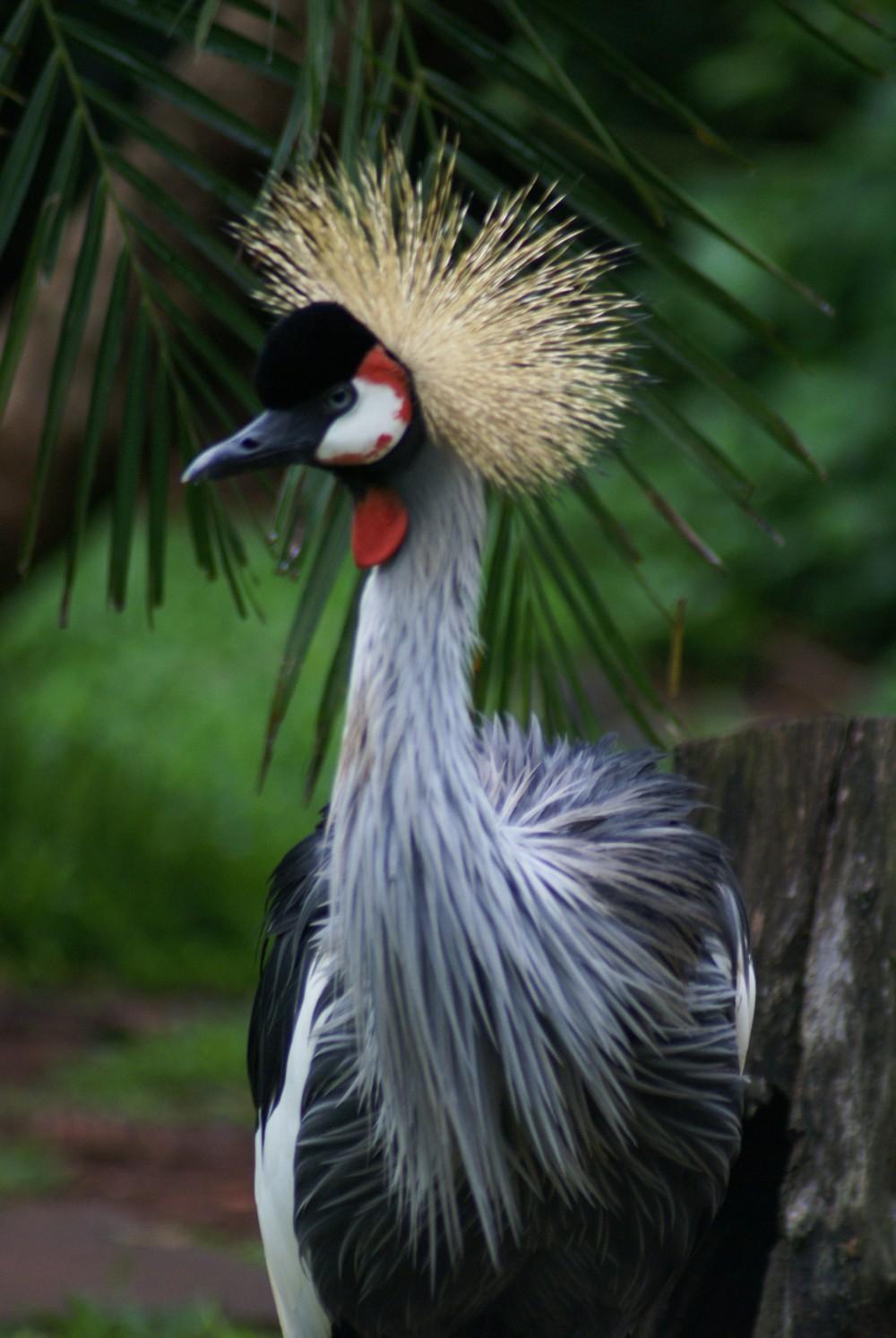 Parque Das Aves (1)