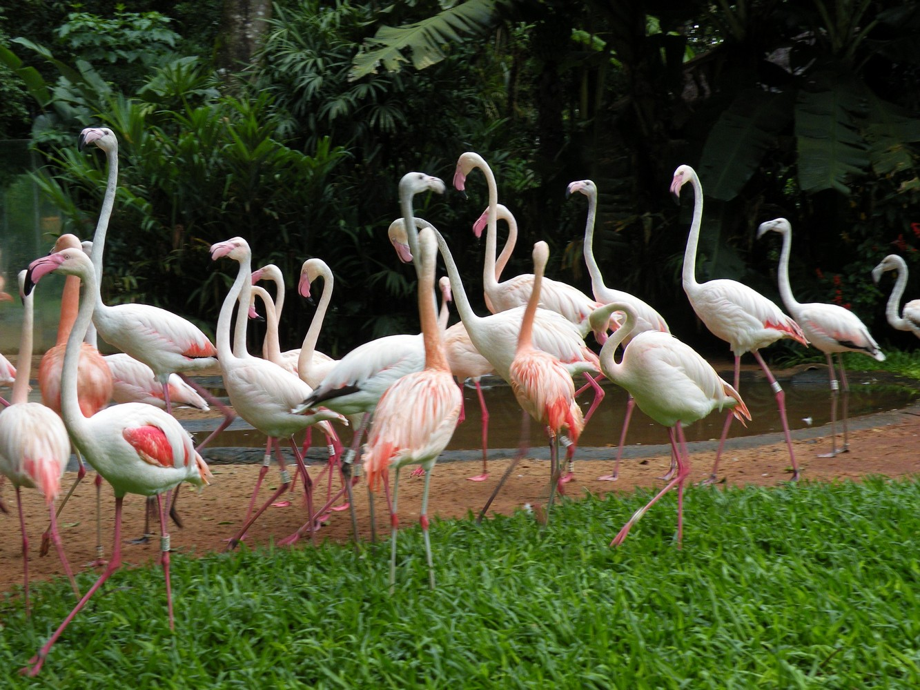 Parque Das Aves (4)