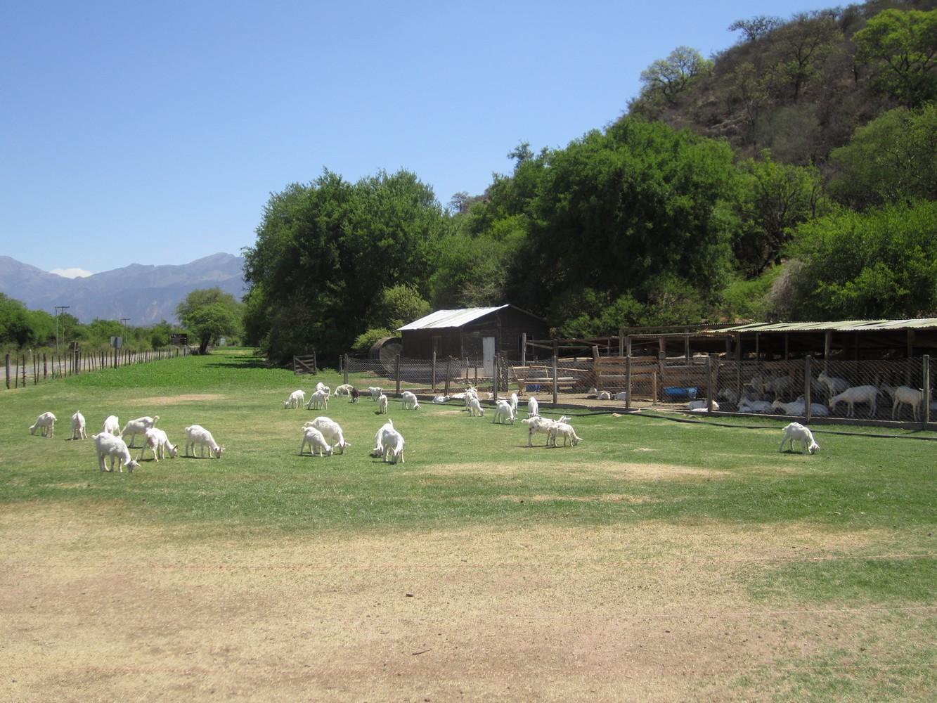Posta de las Cabras - Sur la route vers La Viña - Alemania