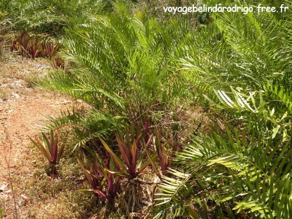 Plantas de Guayigua - Sendero Padre Nuestro - Parque Nacional del Este