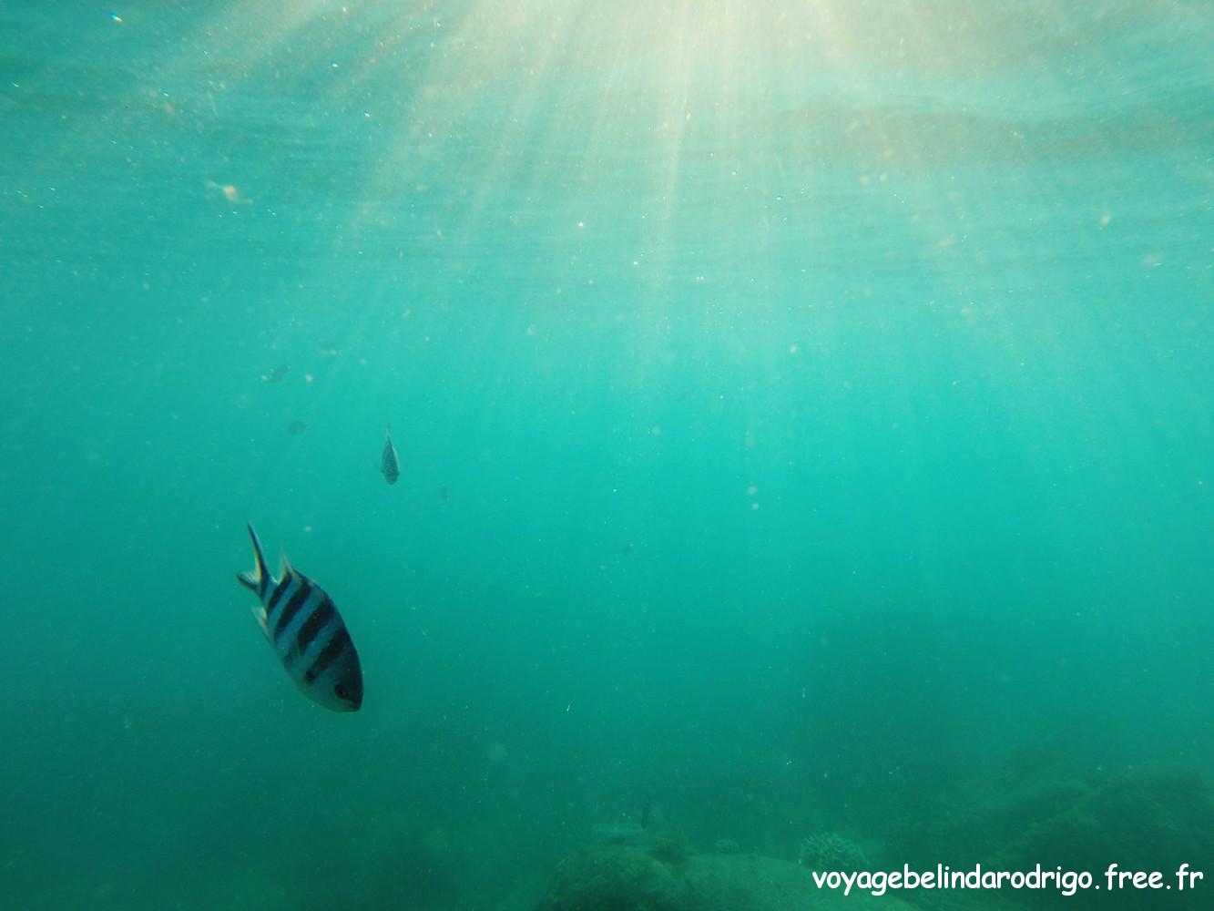 Poisson Bagnard - Snorkeling - Anse Lazio - Praslin