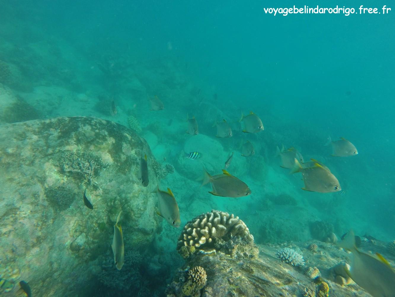 Poisson Lune d'argent - Snorkeling - Anse Lazio - Praslin