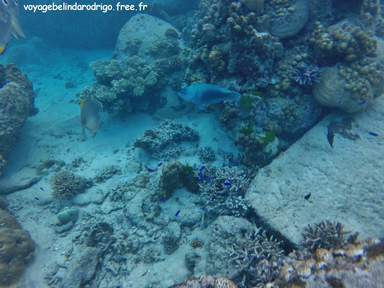 Poisson Perroquet - Snorkeling - Anse Lazio - Praslin