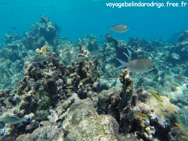 Poissons Demoiselles et Labres - Snorkeling - The Wall - Isla Catalina