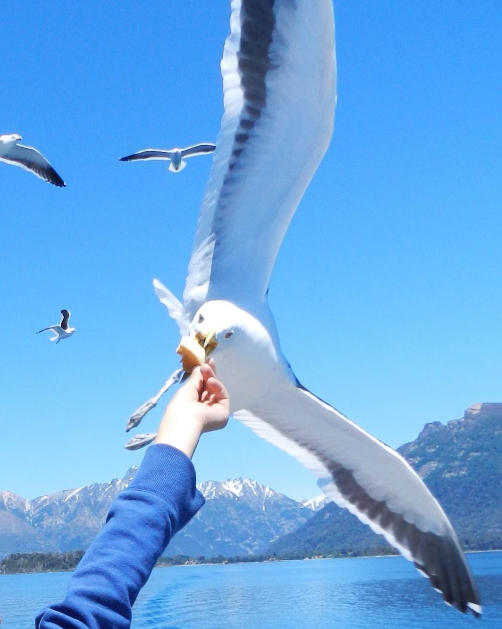 Pose avec les mouettes - Lago Nahuel Huapi