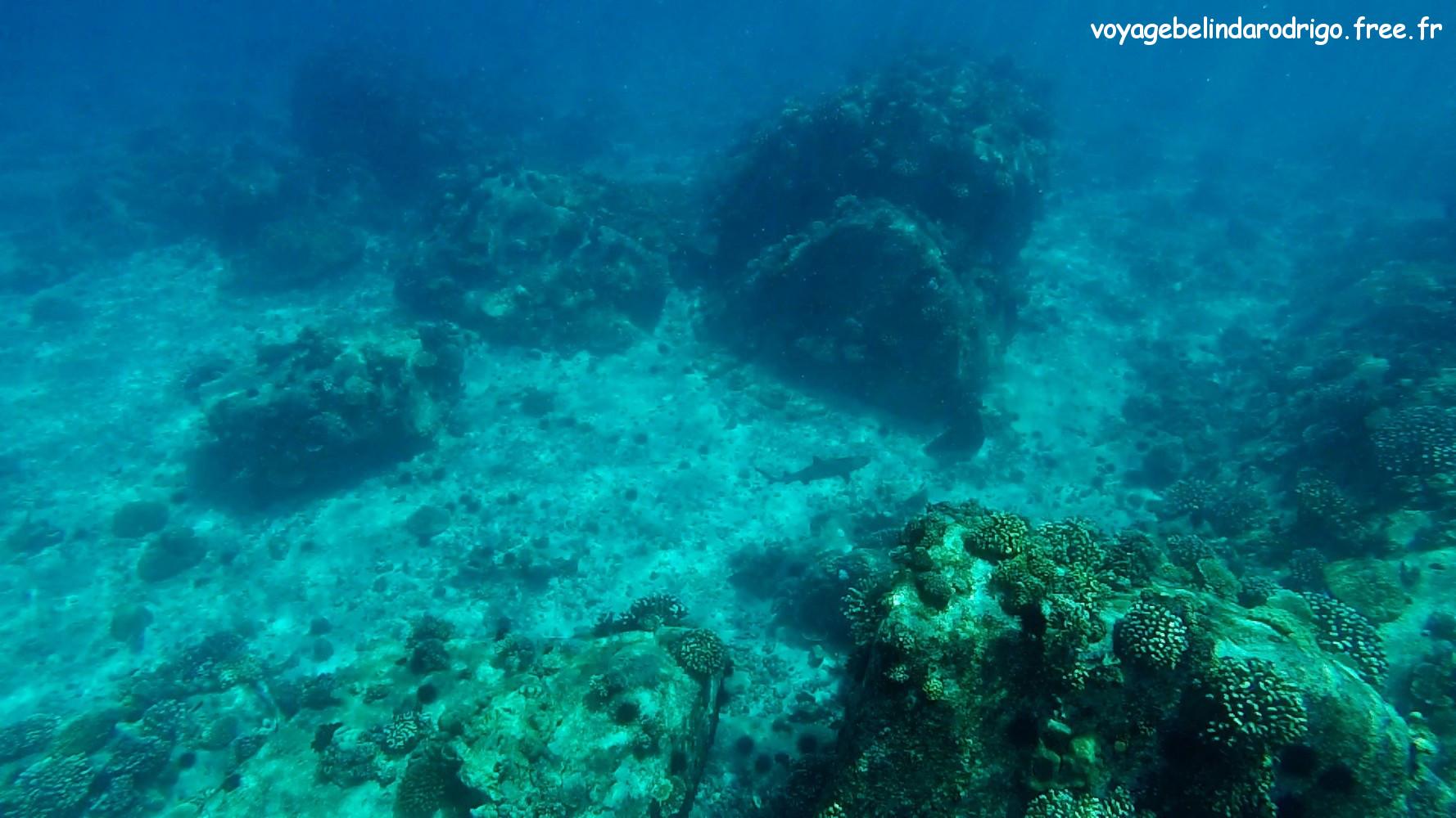 Requin - Snorkeling -  Îles Félicité et Cocos
