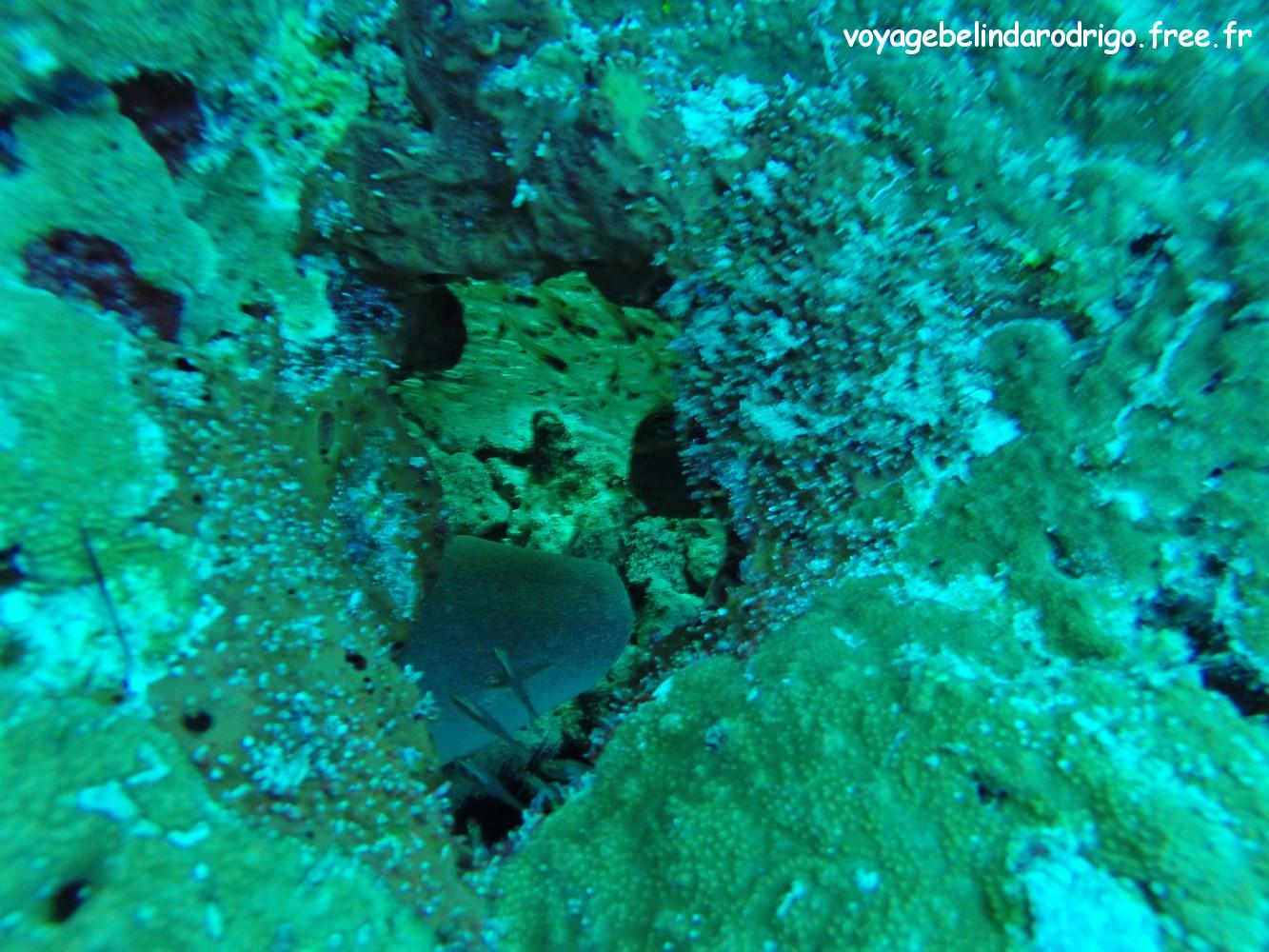Requin nourrice - Plongée -  Praslin