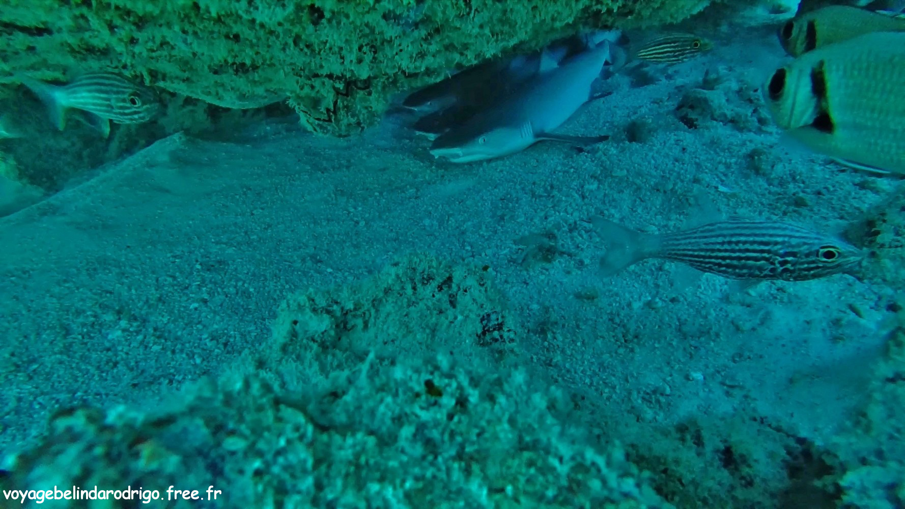 Requins - Plongée - Praslin