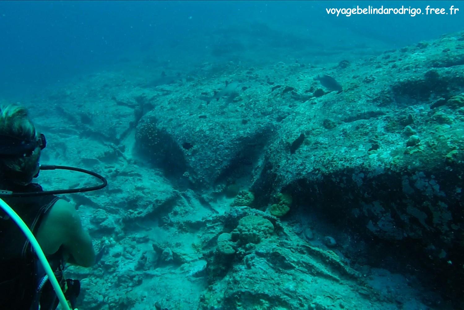 Deux Requins gris de récif - Plongée -  Praslin