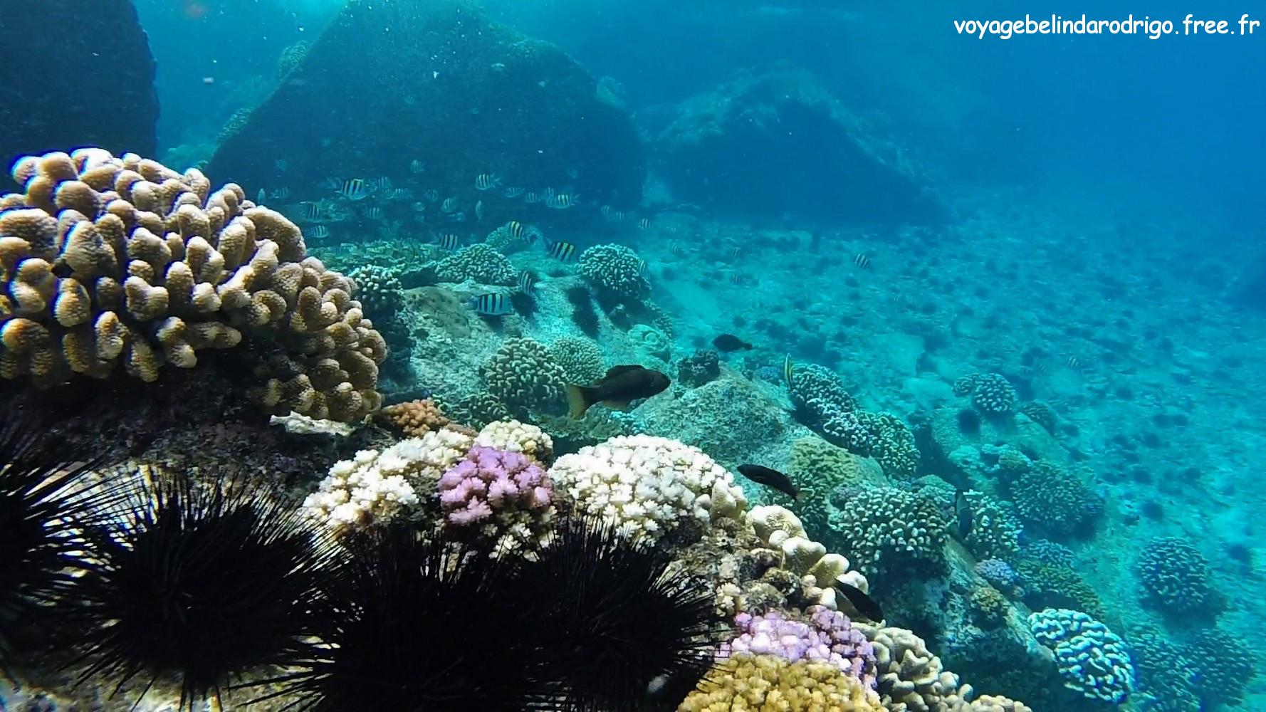 Snorkeling - Îles Félicité et Cocos