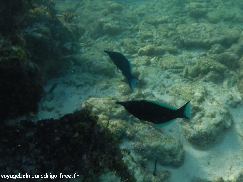 Snorkeling - Anse Lazio - Praslin