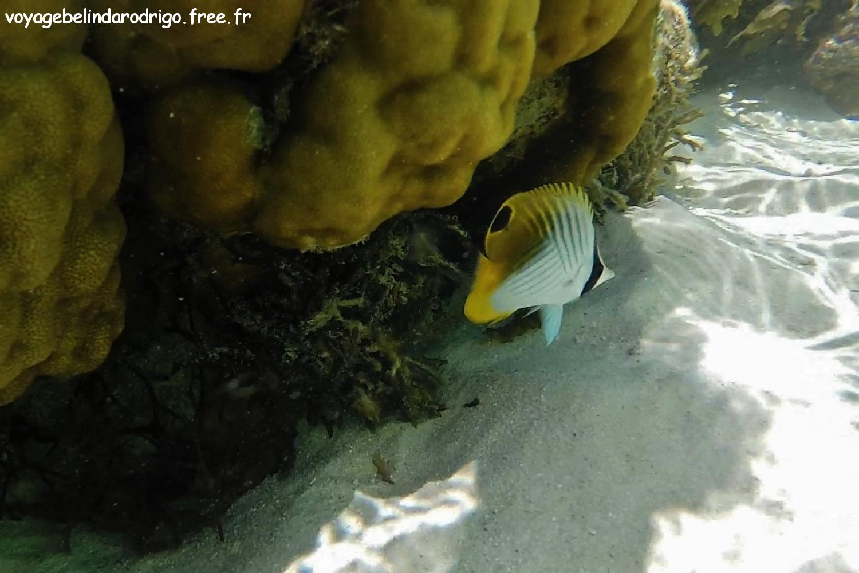 Snorkeling - Anse Royale - Mahé