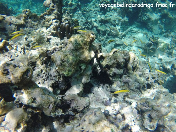 Snorkeling - Playa Fronton - Las Galeras