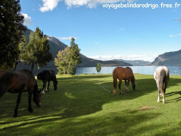 Tondeuses écolos  - Camping Los Baqueanos - Lac Gutierrez